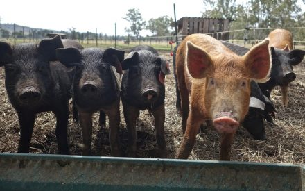 2021 Badger Swine Symposium scheduled for November