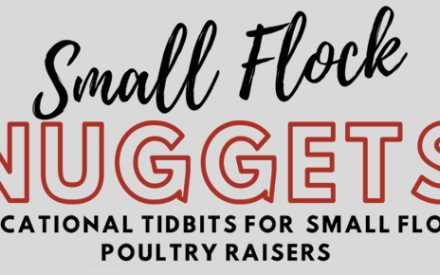 Small Flock Nuggets: Educational Tidbits for Small Flock Poultry Raisers